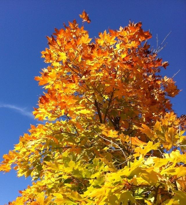 A tree alight