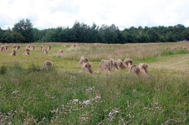 amish hay aug13